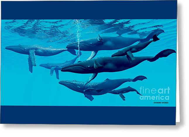 Humpback Whale Group Greeting Card by Corey Ford
