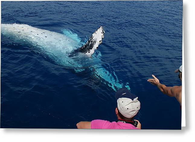 Greeting Card featuring the photograph Humpback Whale Reaching Out by Gary Crockett