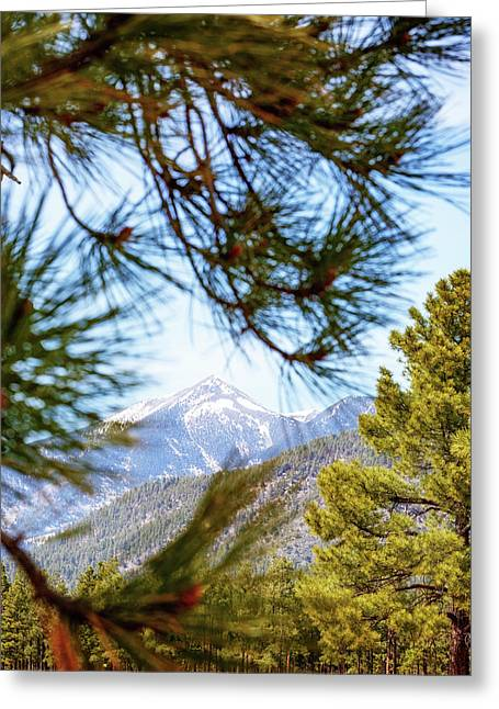 Humphreys Mountain Peak Between Pine Trees Greeting Card by Susan Schmitz