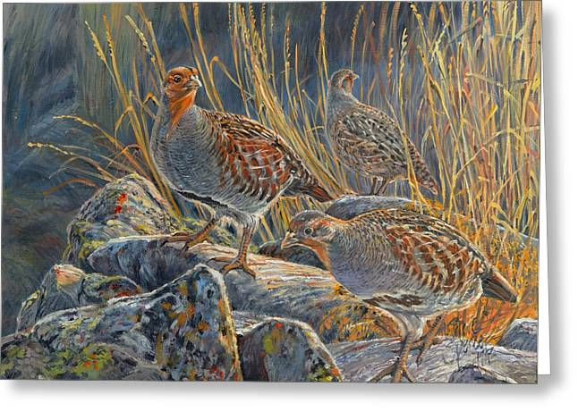 Hungarian Partridges Greeting Card