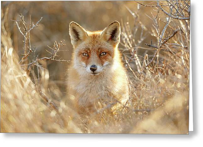 Hungry Eyes - Red Fox In The Bushes Greeting Card by Roeselien Raimond