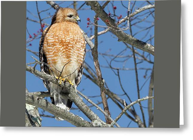 Hunter Square Greeting Card by Bill Wakeley