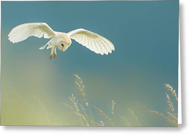 Hunting Barn Owl Greeting Card