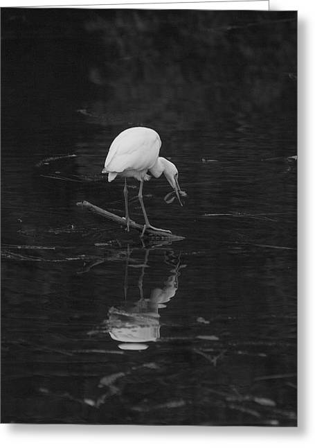 Greeting Card featuring the photograph Hunting Egret by Joshua House
