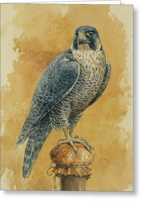 Hunting Falcon Greeting Card by Alexander Sergeevich Khrenov