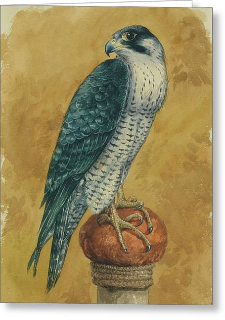 Hunting Hawk Greeting Card by Alexander Sergeevich Khrenov