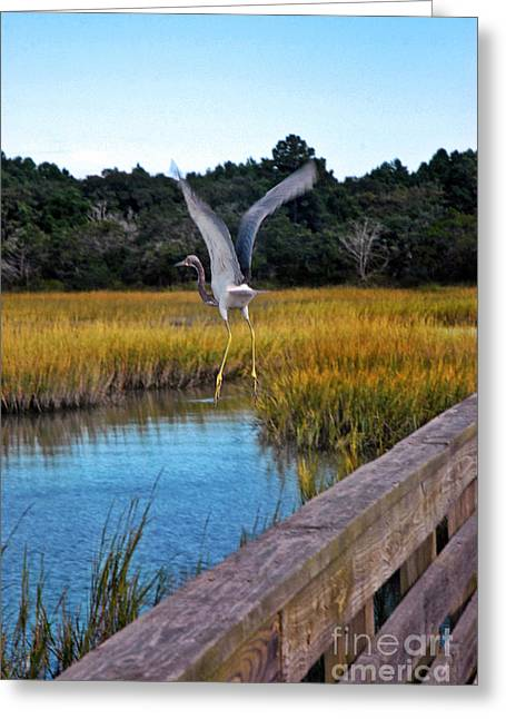 Huntington Beach Heron II Greeting Card by Jeff McJunkin