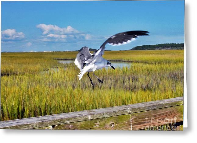 Huntington Beach Marsh Greeting Card by Jeff McJunkin