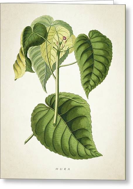 Hura Botanical Print Greeting Card
