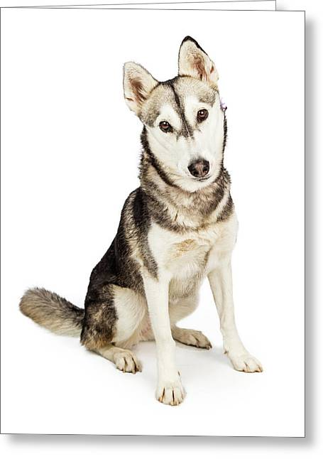 Husky Crossbreed Dog With Attentive Expression Greeting Card by Susan Schmitz