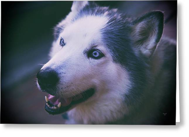Husky Greeting Card by Dennis Baswell