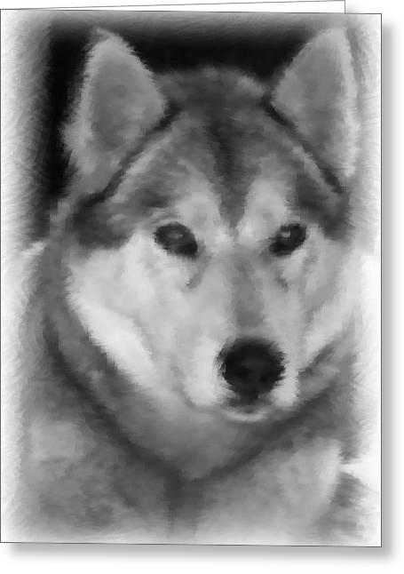 Husky Greeting Card by Lisa Hebert