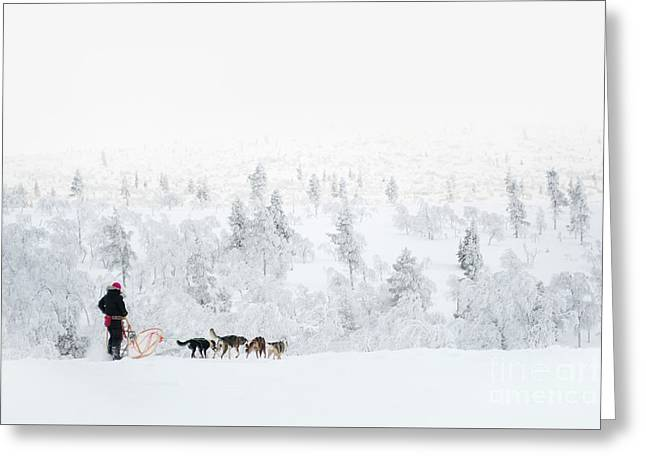 Greeting Card featuring the photograph Husky Safari by Delphimages Photo Creations