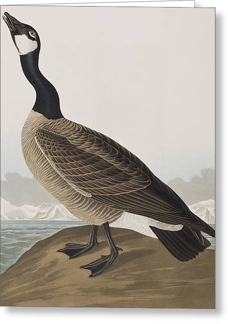 Hutchins's Barnacle Goose Greeting Card by John James Audubon