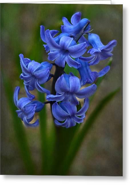 Hyacinth Greeting Card by Ann Bridges