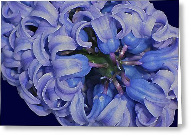 Hyacinth Curls Greeting Card