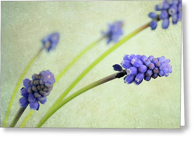 Hyacinth Grape Greeting Card
