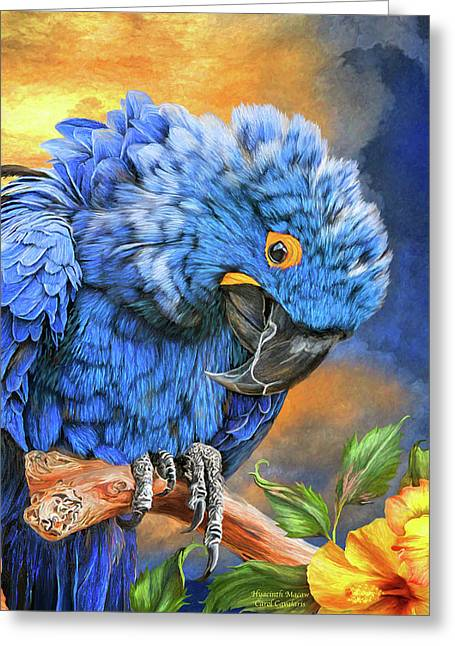 Hyacinth Macaw Greeting Card by Carol Cavalaris
