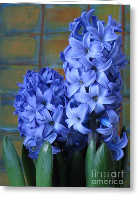 Greeting Card featuring the photograph Hyacinths by Patricia Januszkiewicz