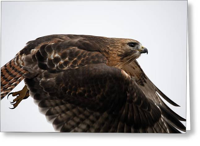 Hybrid Hawk Flyby  Greeting Card