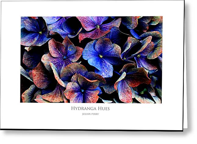 Hydranga Hues Greeting Card