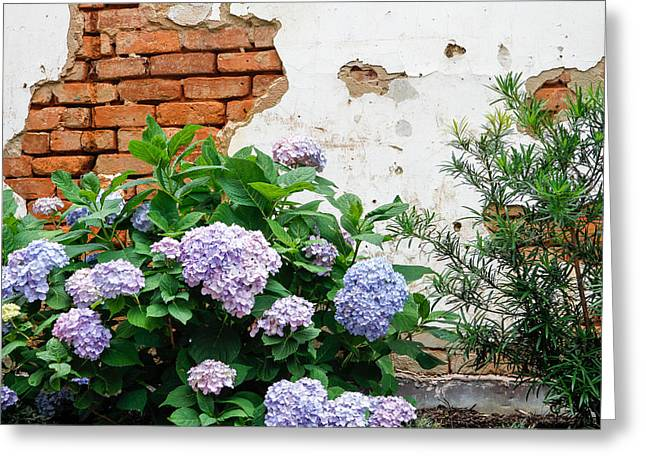 Hydrangea And Bricks Greeting Card by Menachem Ganon