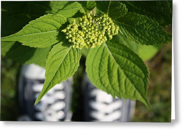 Hydrangea And My Sneakers Greeting Card by Annie Babineau