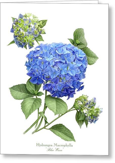 Hydrangea Blue Wave Greeting Card