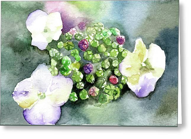Hydrangea Buds Greeting Card