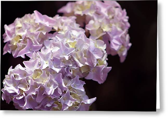 Hydrangea Greeting Card by Evelyn Patrick