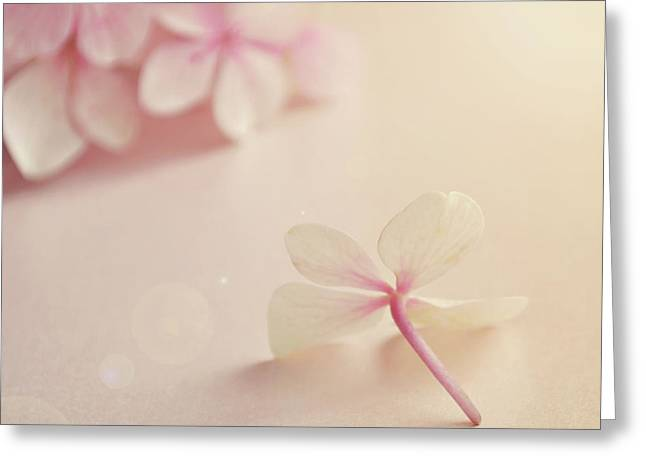 Greeting Card featuring the photograph Hydrangea Flower by Lyn Randle