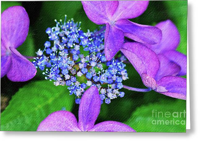 Hydrangea Greeting Card by Kaye Menner