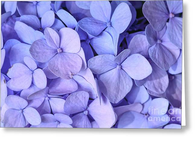 Greeting Card featuring the photograph Hydrangea by Kerri Farley