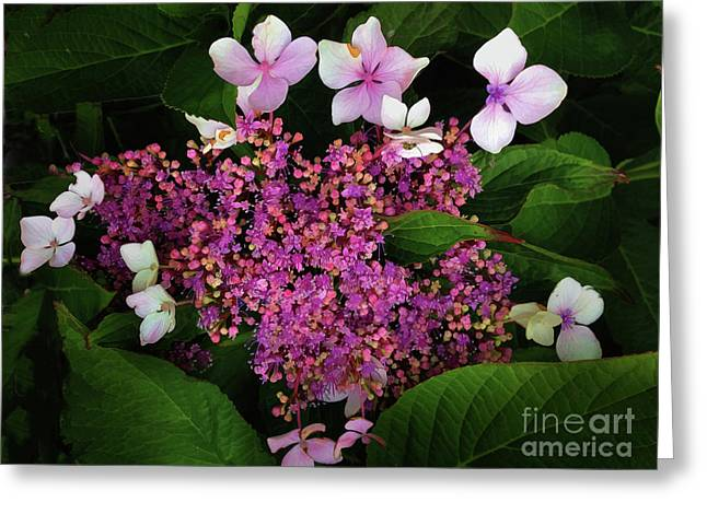 Greeting Card featuring the photograph Hydrangea by Melinda Hughes-Berland