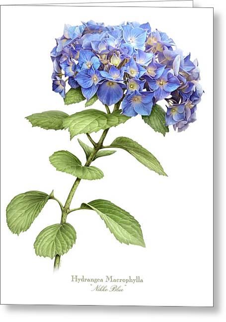 Hydrangea Nikko Blue Greeting Card