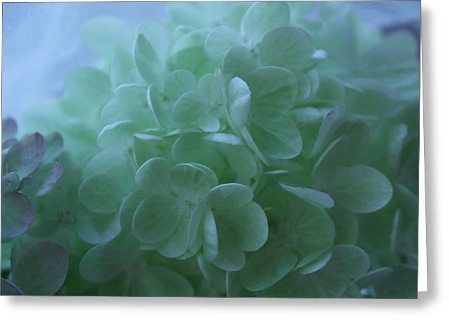 Hydrangea Repose Greeting Card by Nancy TeWinkel Lauren