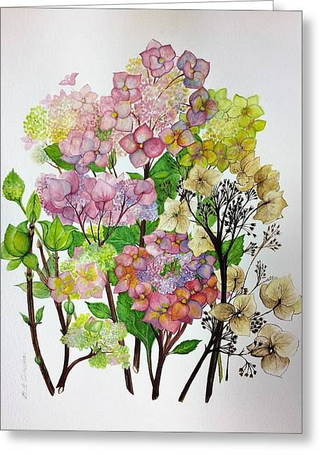 Hydrangea's Changing Colours Greeting Card
