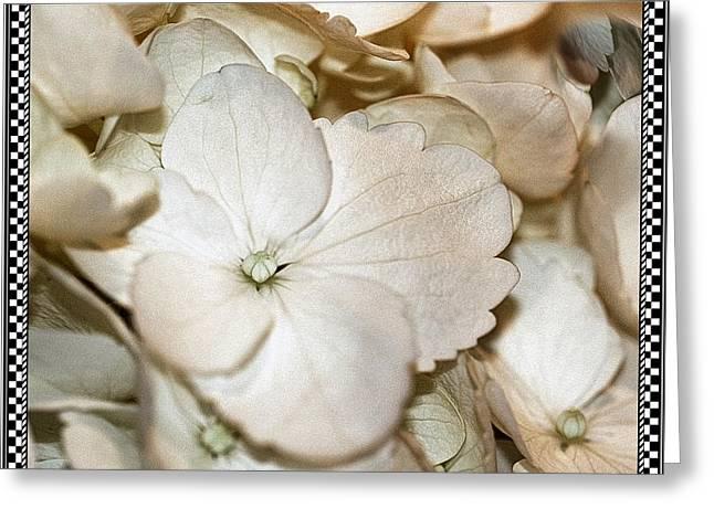 Hydrengea Blossom 3 Framed Greeting Card by Andrea Lazar