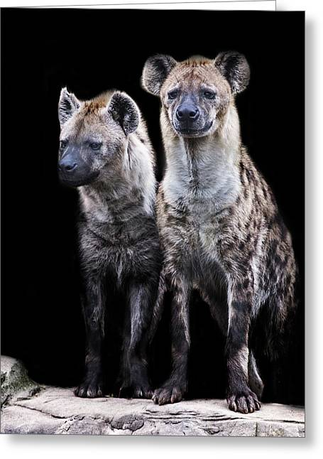 Hyena Lookout Greeting Card