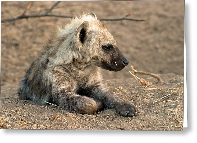 Greeting Card featuring the photograph Hyena by Riana Van Staden
