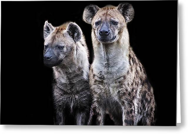 Hyenas Greeting Card