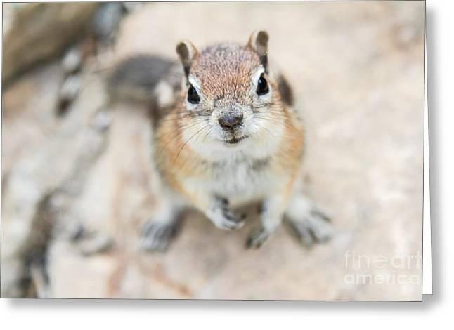 Hypno Squirrel Greeting Card