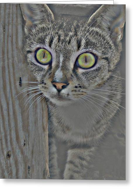 Hypnotize Greeting Card by JAMART Photography