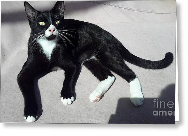 I Am Ceasar. Photo Of Black White Kitten Greeting Card