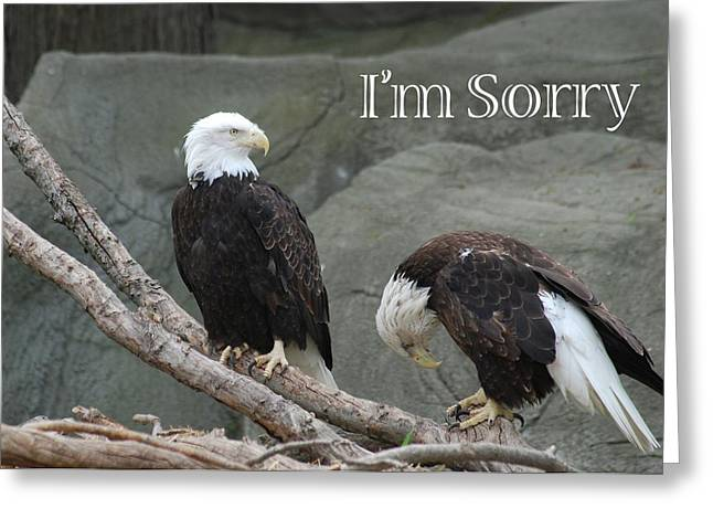 I Am Sorry Greeting Card by Michael Peychich
