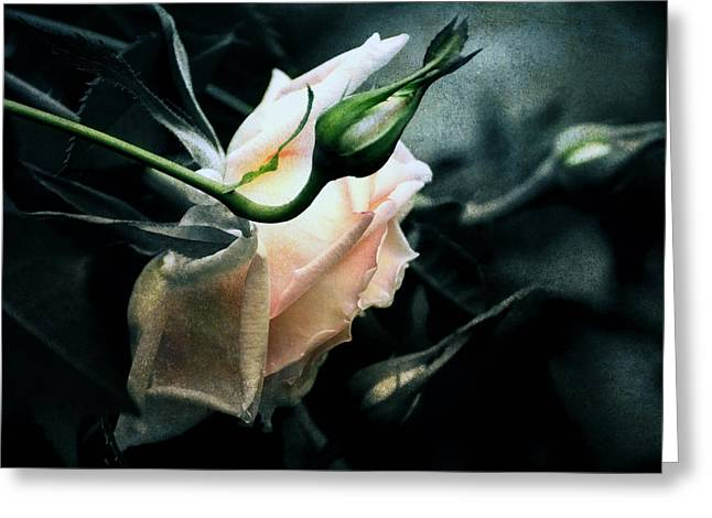 I Am Your Ghost Of A Rose Greeting Card by Georgiana Romanovna