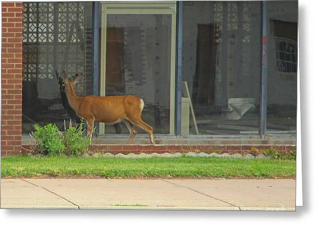 I Could Have Sworn I Saw Another Deer In There Greeting Card by John Malone