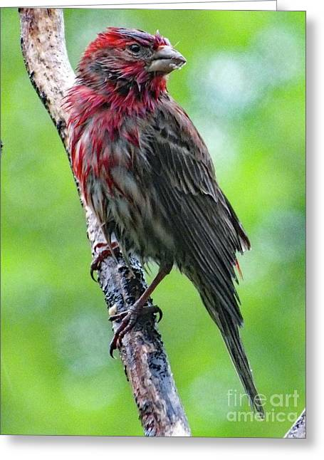 I Could Use A Little Sunshine - House Finch Greeting Card