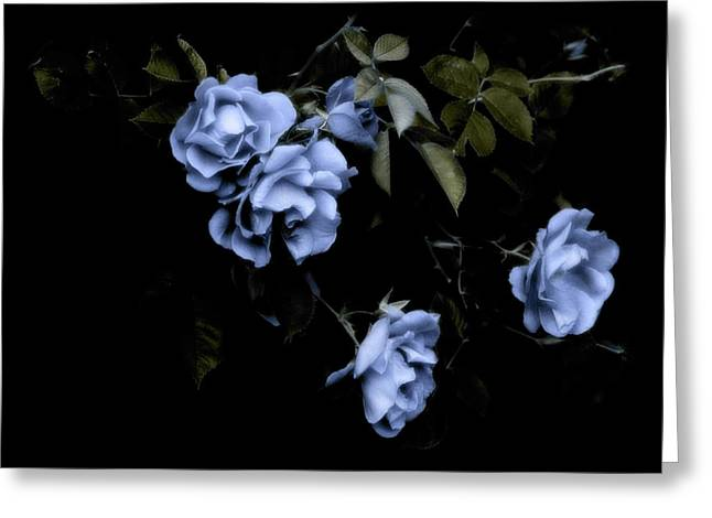 I Dream Of Roses Greeting Card