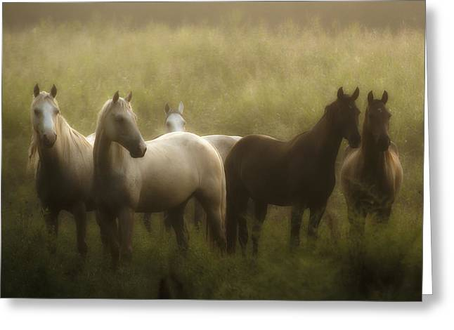 Horse Photographs Greeting Cards - I Dreamed of Horses Greeting Card by Ron  McGinnis